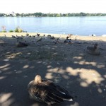 Die Vögel haben an einer schattigen Stelle ihr Revier markiert, Foto: Laura Carstens
