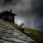 Alpenleben, Foto: Stefan Walter